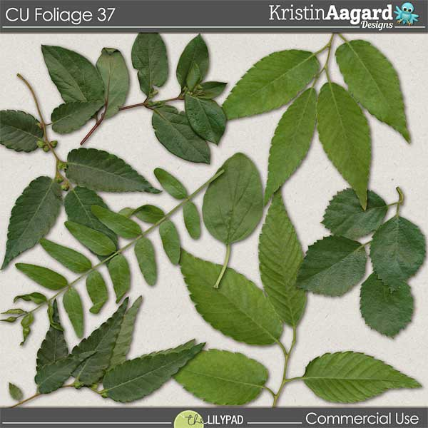 http://the-lilypad.com/store/digital-scrapbooking-cu-foliage-37.html