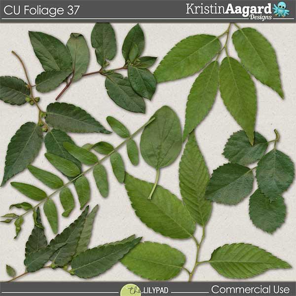 http://the-lilypad.com/store/digital-scrapbooking-cu-foliage-37.html