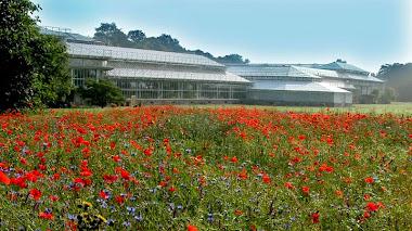 Jardín Botánico Meise en Bélgica
