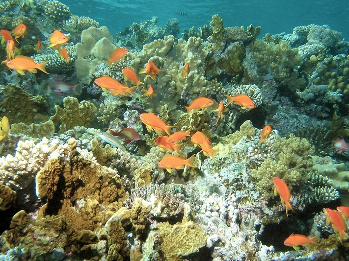 Tubbataha Reefs Natural Park History