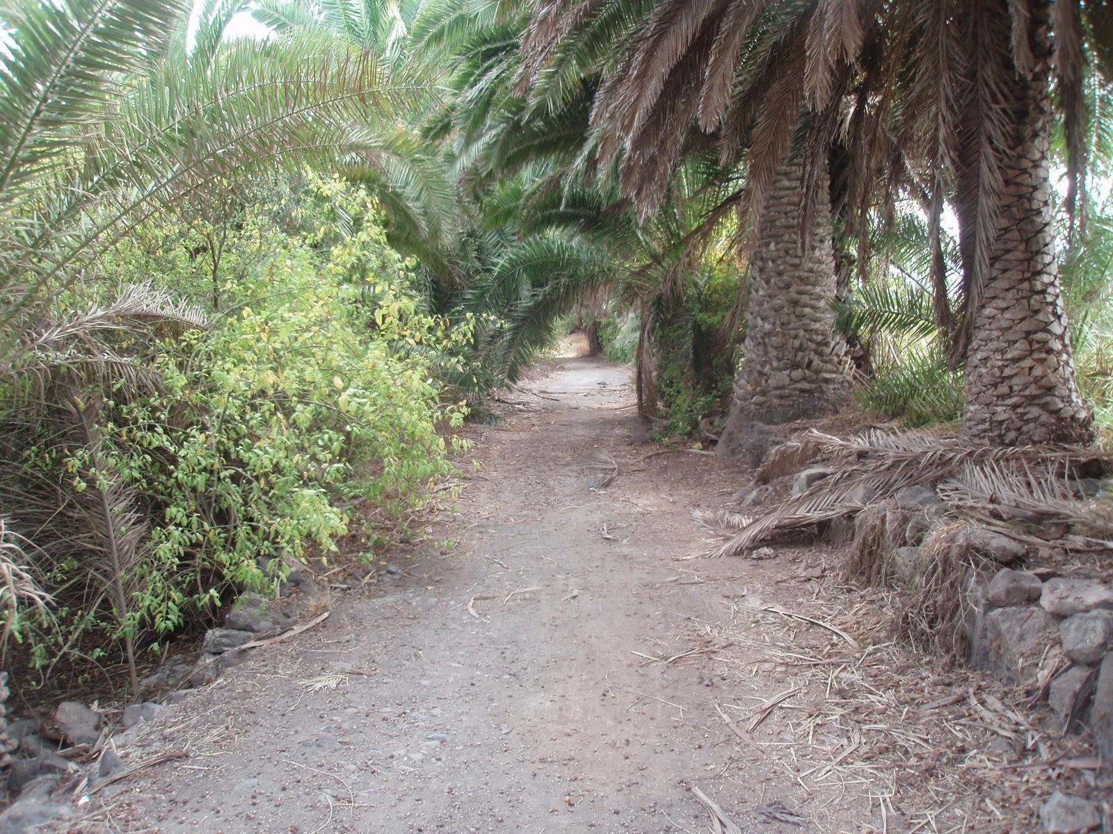 Camino de Salvago