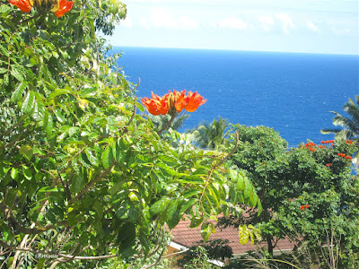 African tulip tree in Hawaii