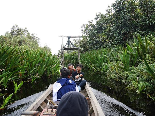 Akses menuju danau Zamrud melalui pohon-pohon lebat