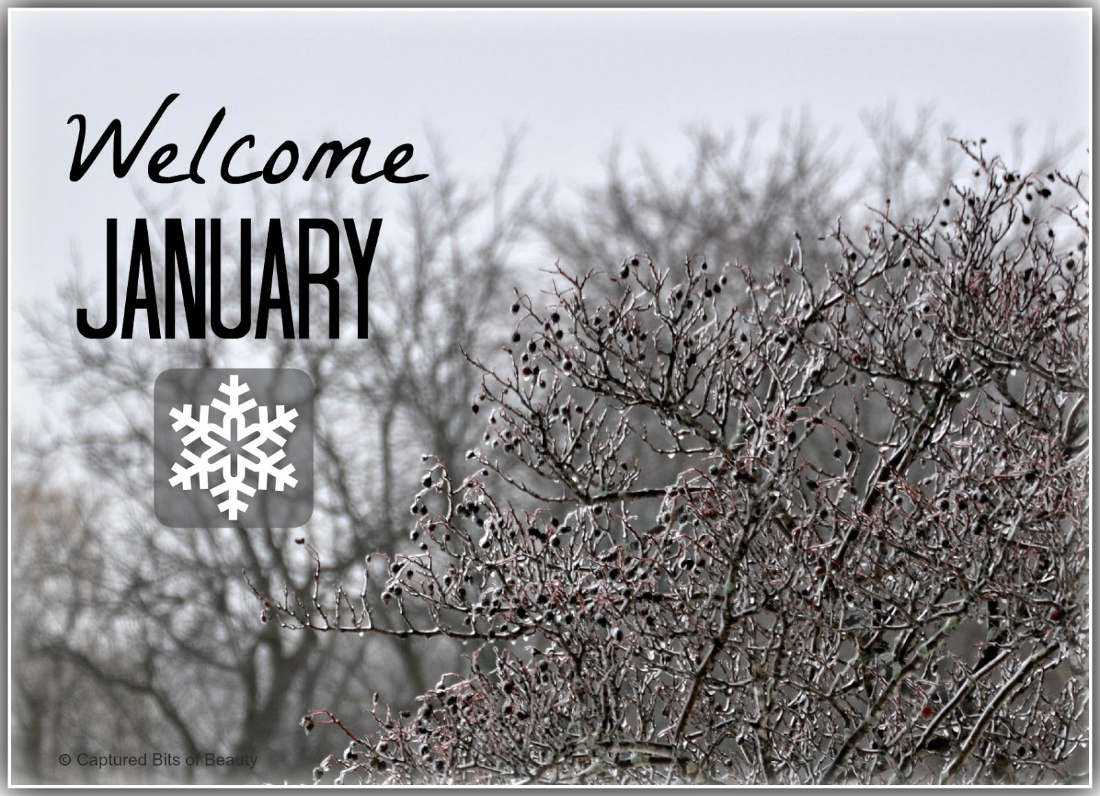 Captured Bits Of Beauty Welcome January