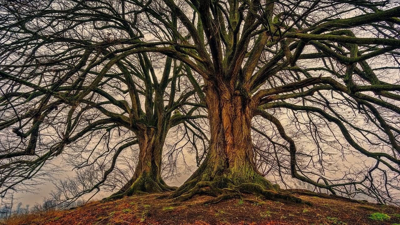 صورة الاشجار المعمرة - اجمل واحلى صور الطبيعة الجميلة والخلابة في العالم