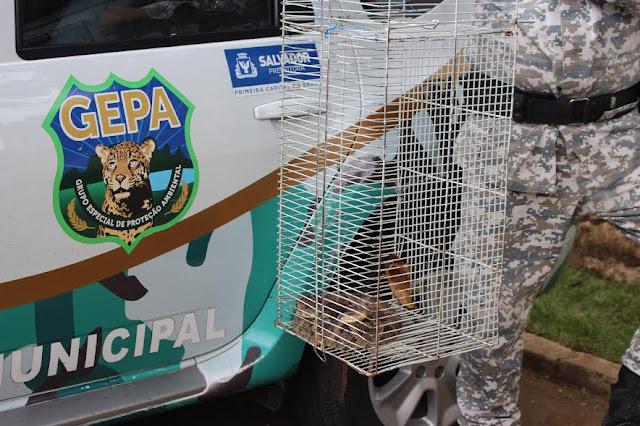 70 cobras foram capturadas desde início do ano em Salvador  pela Guarda Municipal
