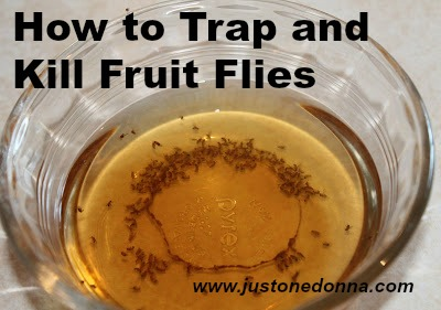 How To Trap And Get Rid Of Fruit Flies Just One Donna