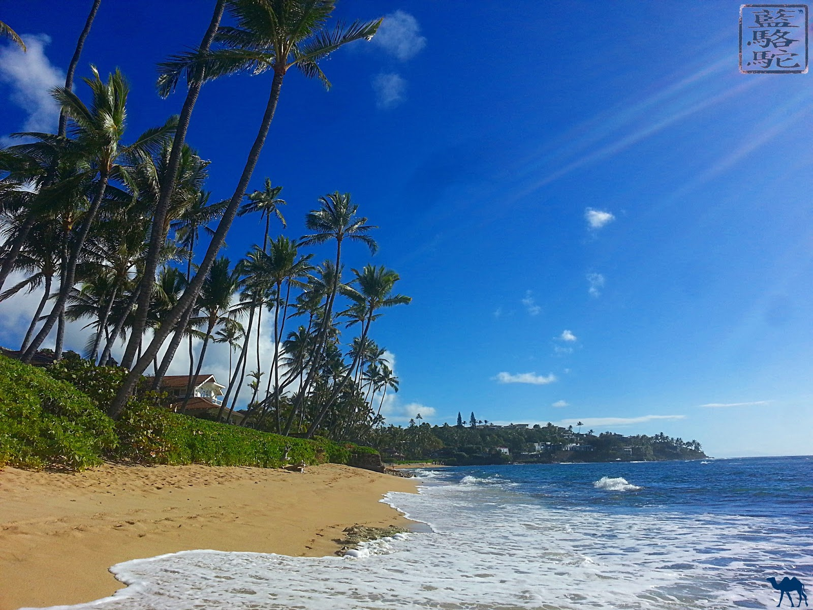 Le Chameau Bleu - Instantanés d'Hawaii - Voyage à Hawaii