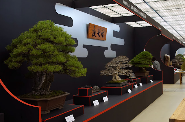 Epic Bonsai trees on display at the Taikan-Ten Bonsai Exhibition in Kyoto Japan