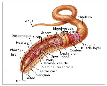 """Dr How's Science Wows: """"a can of worms"""""""