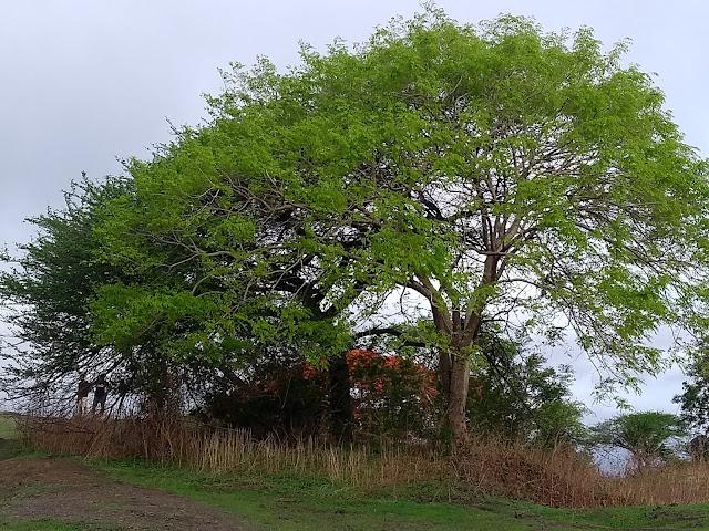 Trees, Pune, hills