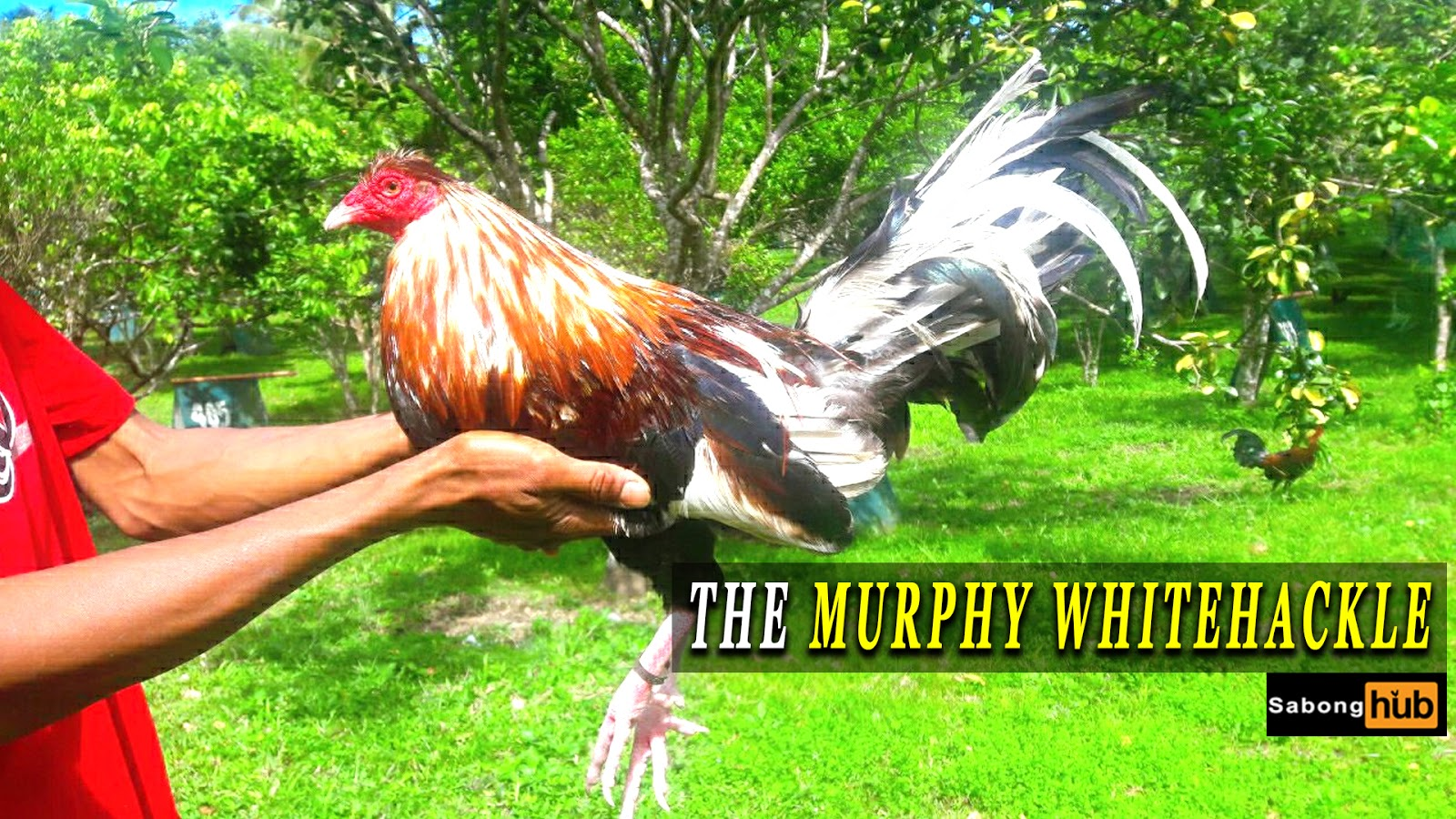 Murphy Whitehackle Bing Images - Newwallpaperjdi co