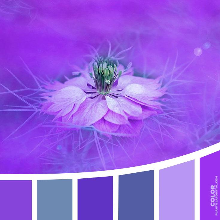 color_361