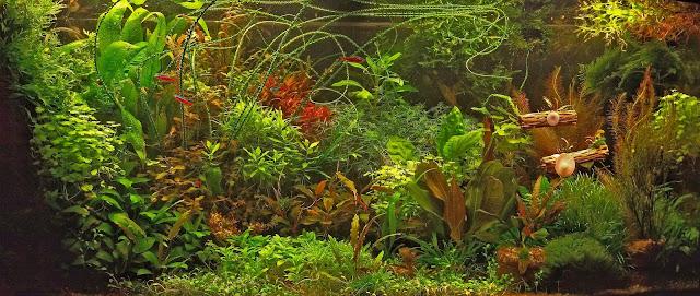 Фото аквариума, травник 260 литров