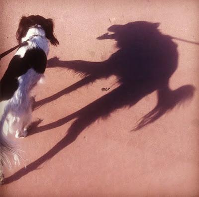 inanılmaz gölgeler köpek