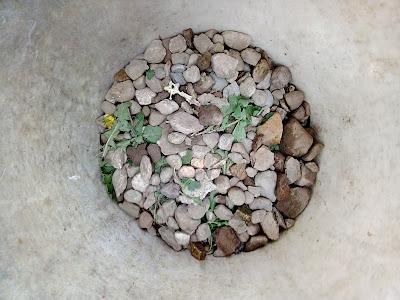 Mezzo secchio di sassi ed erbacce come risultato di circa tre ore di zappettamento nell'orto dei miei.