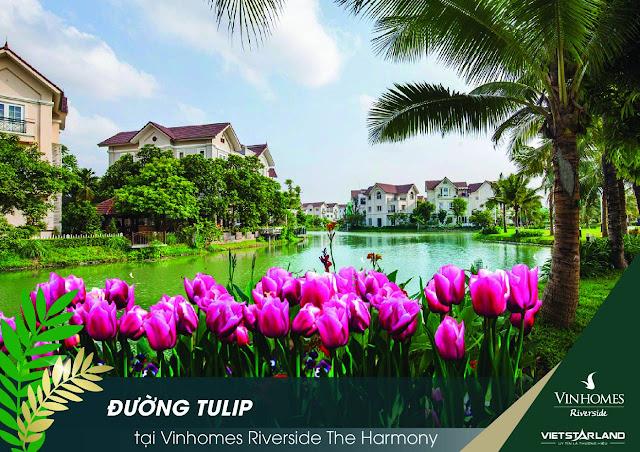 Vinhomes the harmony tulip