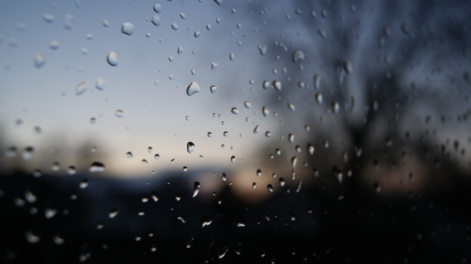 Raindrops Falling On Flowers Wallpaper Bifocal Univision Window Raindrops