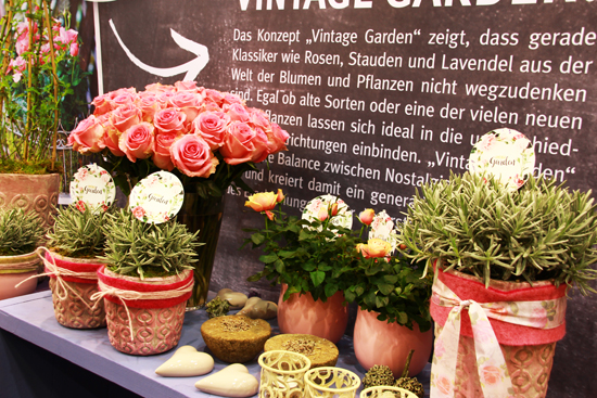 binedoro Blog, IPM ESSEN 2017, Internationale Pflanzenmesse, Blumen, Pflanzen, Sukkulenten, Urban Jungle
