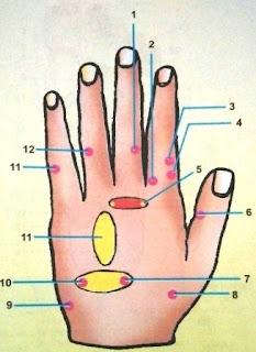 Punggung Tangan Kiri