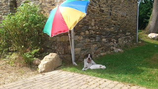 It's a tough life being a dog - relaxing at our Gite