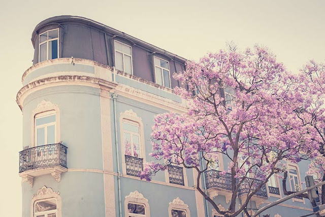 A beautiful pombaline style blue building and a blossom tree in Lisbon, Portugal