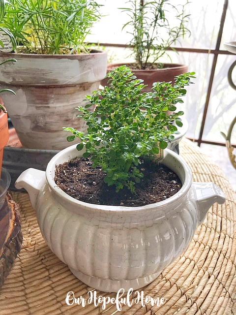 vintage ironstone planter houseplant
