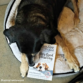 senior rescue dog Chicken Soup for the Soul book