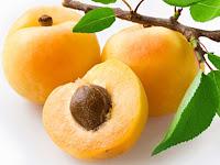 apricot - die Aprikose - Prunus armeniaca