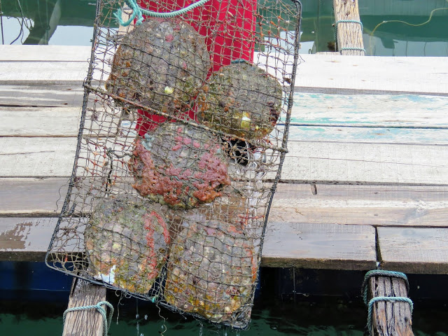 Oysters at a pearl farm on Halong Bay in Vietnam