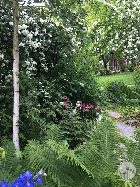 ogrod_w_lesnym_stylu