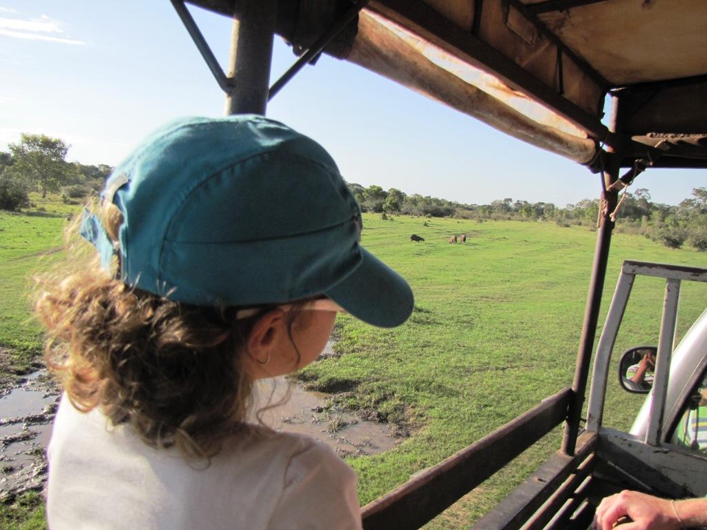 safári no pantanal
