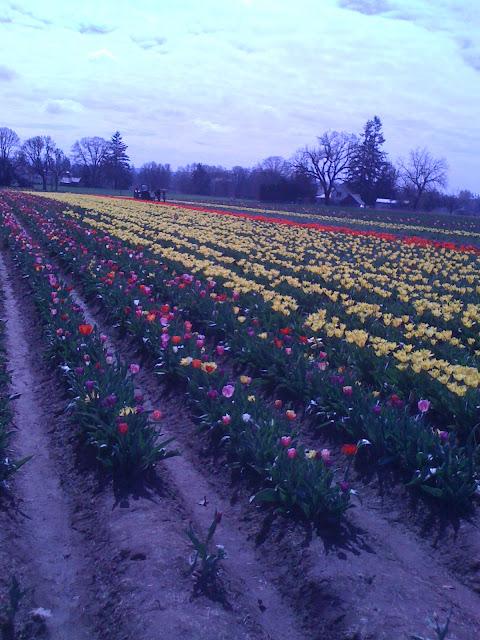Woodburn Tulip Festival OR