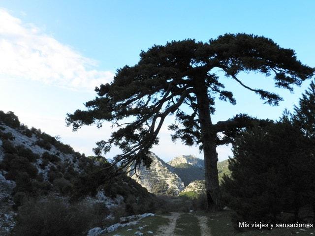 Ruta de los tejos milenarios en la Sierra de Cazorla, Segura y las Villas