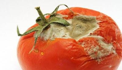 Tomat Busuk Ternyata Bisa Hasilkan Listrik - Gula77