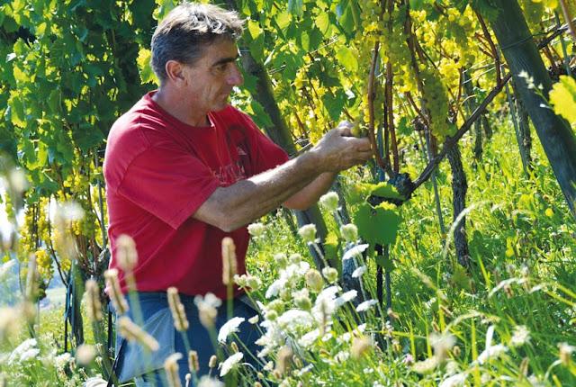 Biowinzer Bruno Martin: «Piwi-Sorten sind ein bedeutender Fortschritt»