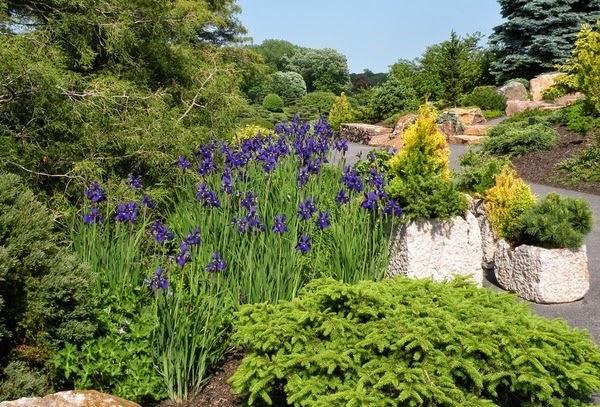 Декоративные растения для сада  Образцовая Усадьба