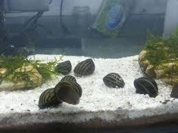 Jangan Ikannya Saja yang Dirawat, Tapi Aquariumnya Juga! Tips Ini akan Menjaga Aquarium Tetap Bersih