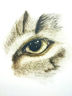 Watercolour painting of a cat, portrait study.
