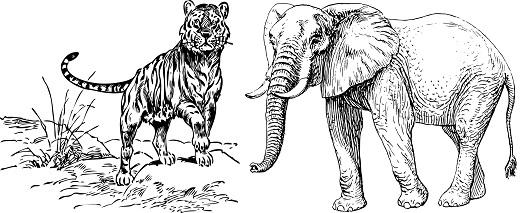 Véber Károly Ébred a dzsungel könyv