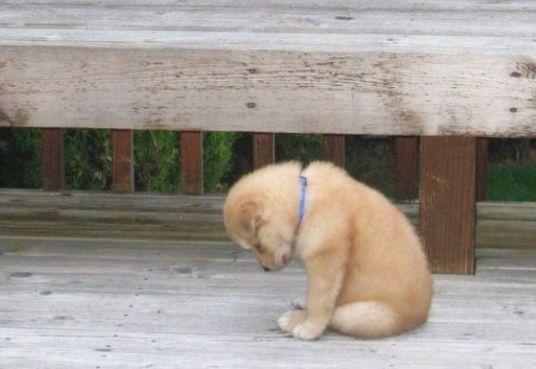 「謝る 犬」の画像検索結果