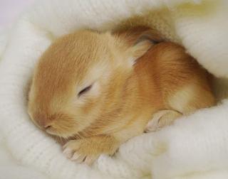 n menyebarkan tips mengenai pemeliharaan anak kelinci Kabar Terbaru- CARA MERAWAT ANAK KELINCI BERDASARKAN PENGALAMAN
