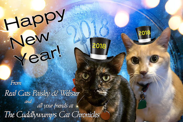 Happy New Year 2018, from Real Cats Paisley & Webster and all your friends at The Cuddlywumps Cat Chronicles