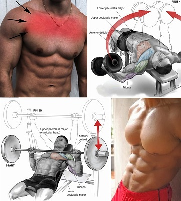 How Do You Know You Are Building Muscles - The Chest