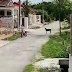 Brave Kid Shows How To Get Rid Of Dogs Who Wanted To Chase And Bite Him
