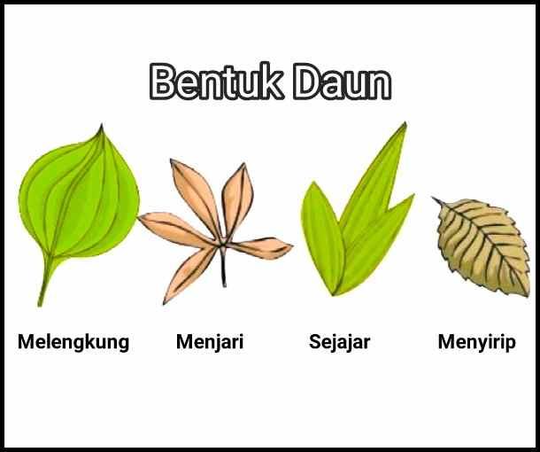 bagian+bagian+tumbuhan