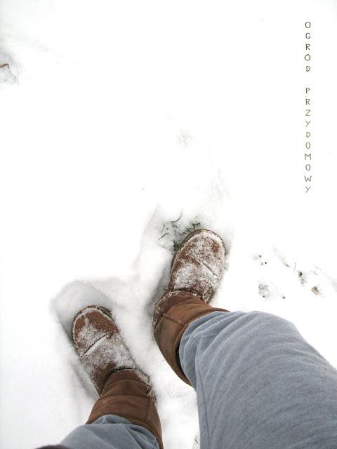śnieg zimą