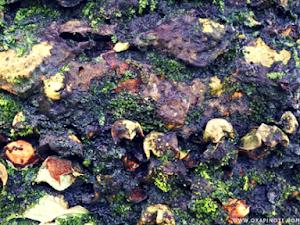 Abstract Photography: Memotret Tekstur yang Menarik dari Batang Pohon Pinus