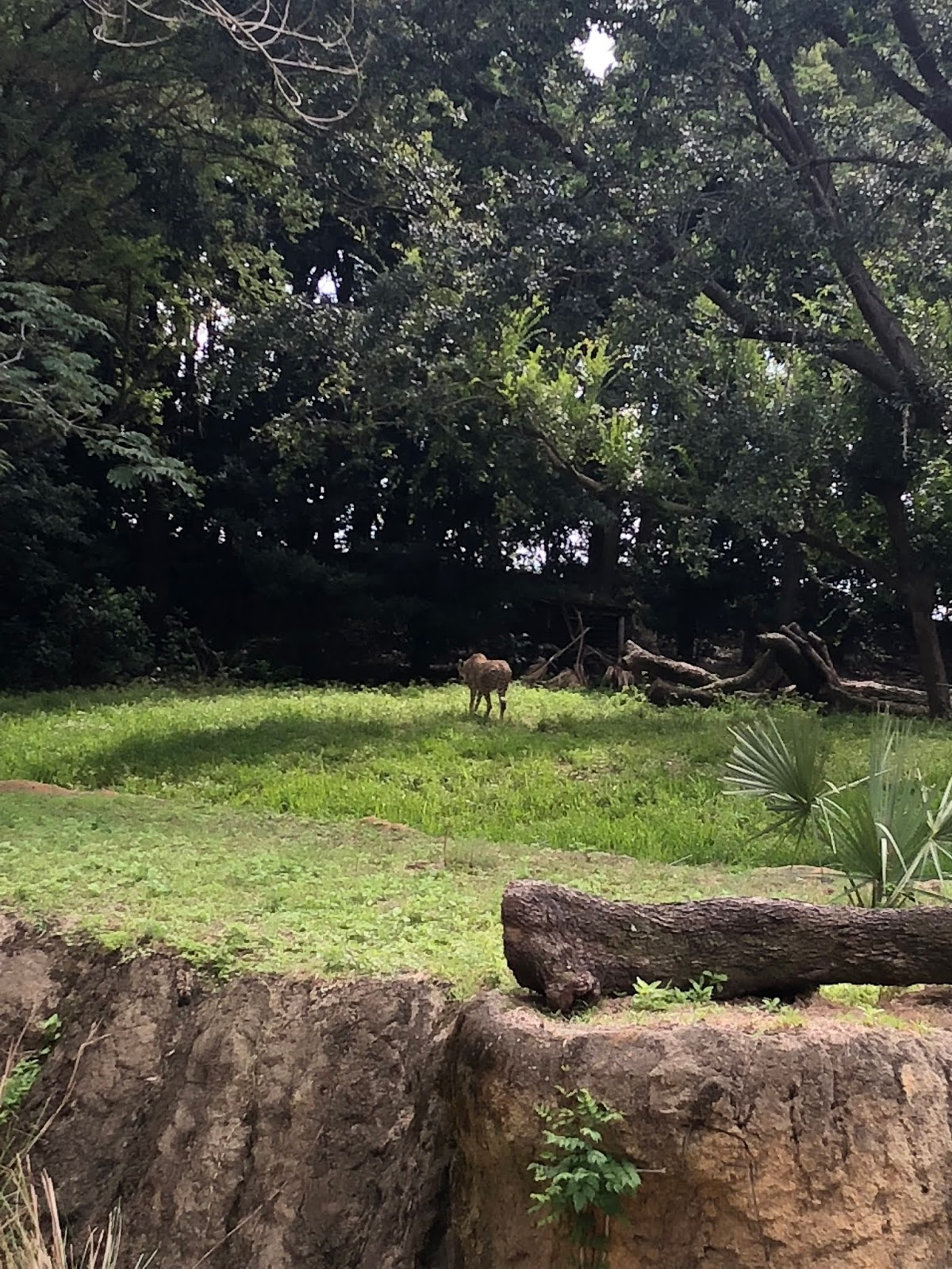 Stephanie Kamp Blog: Disney June 2018 Trip 1