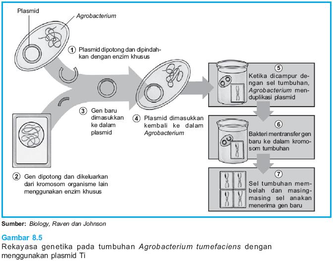 Belajar Serbaneka Bioteknologi